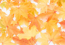 Dreamy Pastel Chestnut Leaves Background Royalty Free Stock Image