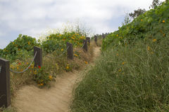 Dreamy Path. Tranquil path by the ocean's edge Stock Photography