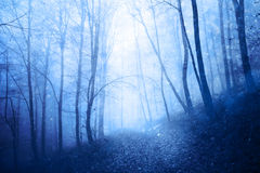 Dreamy peaceful blue colored snowy forest Royalty Free Stock Photo
