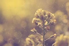 Dreamy photo of amazing wildflower Royalty Free Stock Photography