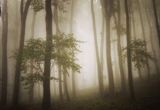 Dreamy photo of a beautiful green forest with fog Stock Photos