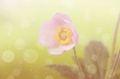 Dreamy photo of a beauty wildflower Stock Image