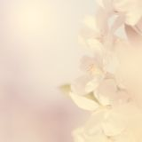 Dreamy photo of cherry tree, detail Royalty Free Stock Images