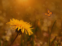 Dreamy photo of a dandelion and butterfly in the field Royalty Free Stock Photo