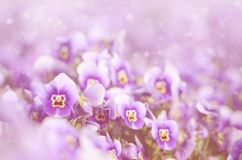 Dreamy photo of violet flower Royalty Free Stock Images