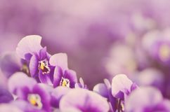 Dreamy photo of violet flower Stock Photo