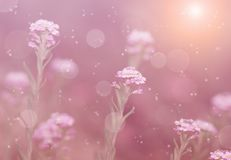Dreamy photo of wildflower Stock Photography
