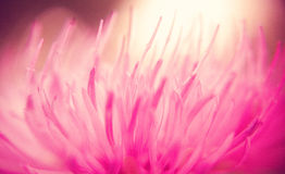 Dreamy pink flower Stock Image