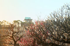 Dreamy plum blossoms with Japanese castle in background Royalty Free Stock Images