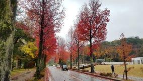 Dreamy road in Kanazawa Royalty Free Stock Photos
