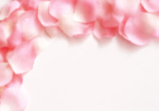 Dreamy Rose Petal Border. Pink and white rose petals arranged in a border over a white background with a soft blur effect applied Stock Images