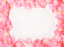 Dreamy Rose Petal Frame. Pink and white rose petals arranged in a frame shape over a white background with a soft blur effect applied Royalty Free Stock Photos
