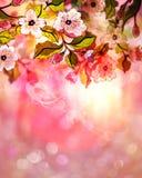 Dreamy Sakura Royalty Free Stock Photo