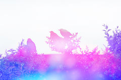 Dreamy scene with starling birds on the rooof in the garden Royalty Free Stock Photography