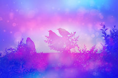 Dreamy scene with starling birds on the rooof in the garden Stock Photos