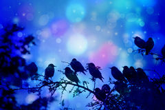 Dreamy scene with starling birds sittin on the tree branches in the garden. Dreamy winter scene with starling birds sittin on the tree branches in the garden Stock Photo