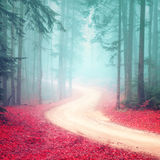 Dreamy seasonal colorful foggy forest road Stock Photography