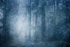 Dreamy snowfall in blue colored forest Royalty Free Stock Photography
