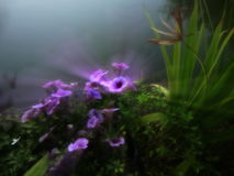 Dreamy soft blurred flower, blue-grey backdrop. Purple Petunia taken with zoom-exposure Royalty Free Stock Image