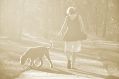 Dreamy soft sepia light background woman walking dog in woods Royalty Free Stock Photo