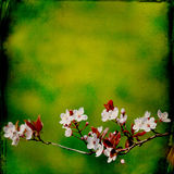 Dreamy springflowers background Stock Photo