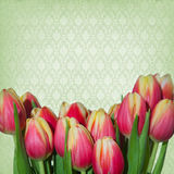 Dreamy springflowers background. On old paper structure royalty free stock image