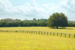 Dreamy summer pasture. A hay field in a dreamy pasture. A fence cuts down the middle with a large oak tree in the next pasture royalty free stock images