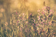 Dreamy sunny atmosphere of summer meadow in detail Stock Photo