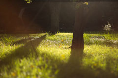 Dreamy sunny lawn Stock Images