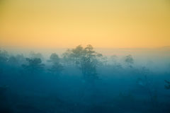 A dreamy swamp landscape before the sunrise. Colorful, misty look. Marsh scenery in dawn. Stock Images