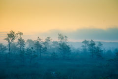 A dreamy swamp landscape before the sunrise. Colorful, misty look. Marsh scenery in dawn. Stock Photography