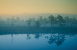 A dreamy swamp landscape before the sunrise. Colorful, misty look. Marsh scenery with a lake. Stock Photography