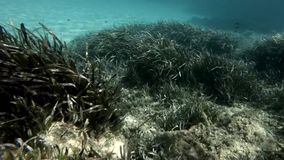 Rocks and underwater vegetation. A dreamy swim in a terrestrial paradise . swim underwater . apnea stock footage