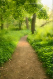 Dreamy Trail. Hiking Trail with dreamy effect Stock Images