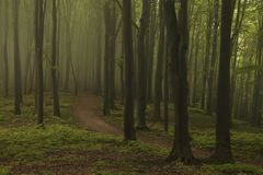 Dreamy trail in foggy forest. Dark scary forest like a fairy tale Stock Photos