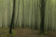 Dreamy trail in foggy forest. Dark scary forest like a fairy tale Royalty Free Stock Photos