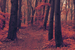 Dreamy trail in foggy forest royalty free stock photos