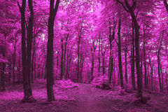 Dreamy trail in foggy forest. Dark scary forest like a fairy tale Royalty Free Stock Images