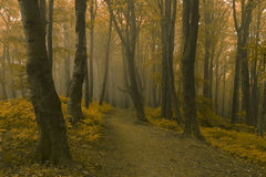Dreamy trail in foggy forest. Dark scary forest like a fairy tale Royalty Free Stock Photo