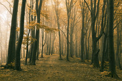 Dreamy trail in foggy forest stock photo