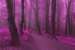 Dreamy trail in foggy forest. Dark scary forest like a fairy tale Royalty Free Stock Photography