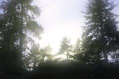 Dreamy trees Stock Photos