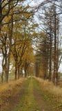 Dreamy walking paths royalty free stock photo