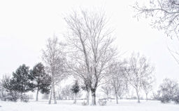 Dreamy winter Royalty Free Stock Images