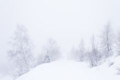 Dreamy winter environment. Snowy slope with elegant birch trees in a foggy and misty day. Pure white background, minimalist composition. Western Alps, Piedmont Stock Photos