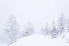 Dreamy winter environment Stock Photos