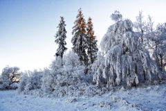 Dreamy winter forest Royalty Free Stock Photography