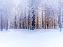 Dreamy winter forest Royalty Free Stock Photo