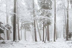 Dreamy winter forest Stock Photo