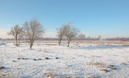 Dreamy winter landscape of a nature reserve with bare trees. Panoramic snowy landscape with some bare trees striking against the blue sky Stock Image